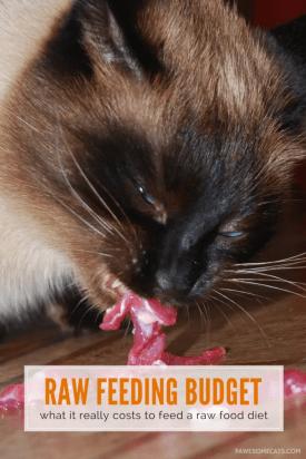 cost-feeding-raw-cat-food