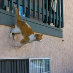 High Rise Syndrome: Keeping your Cat Safe from Falls