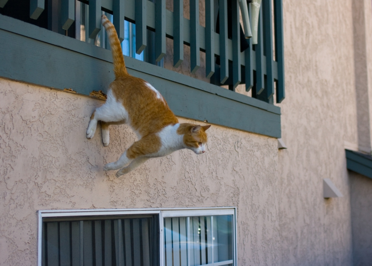 Topic des chats - Page 33 Ginger-cat-descending-balcony
