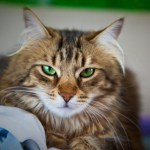 10 Common Mistakes of First Time Cat Owners