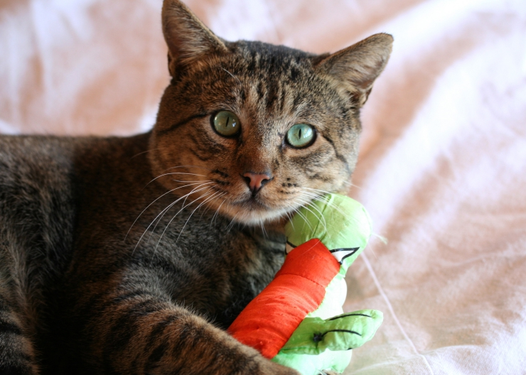 The symptoms of stress are many and varied; and range from the obvious, such as spraying, to the subtle, such as over-grooming | 5 Ways to Reduce Stress in Cats