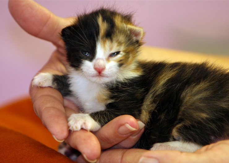 What To Do With A Stray Cat And Her Kittens