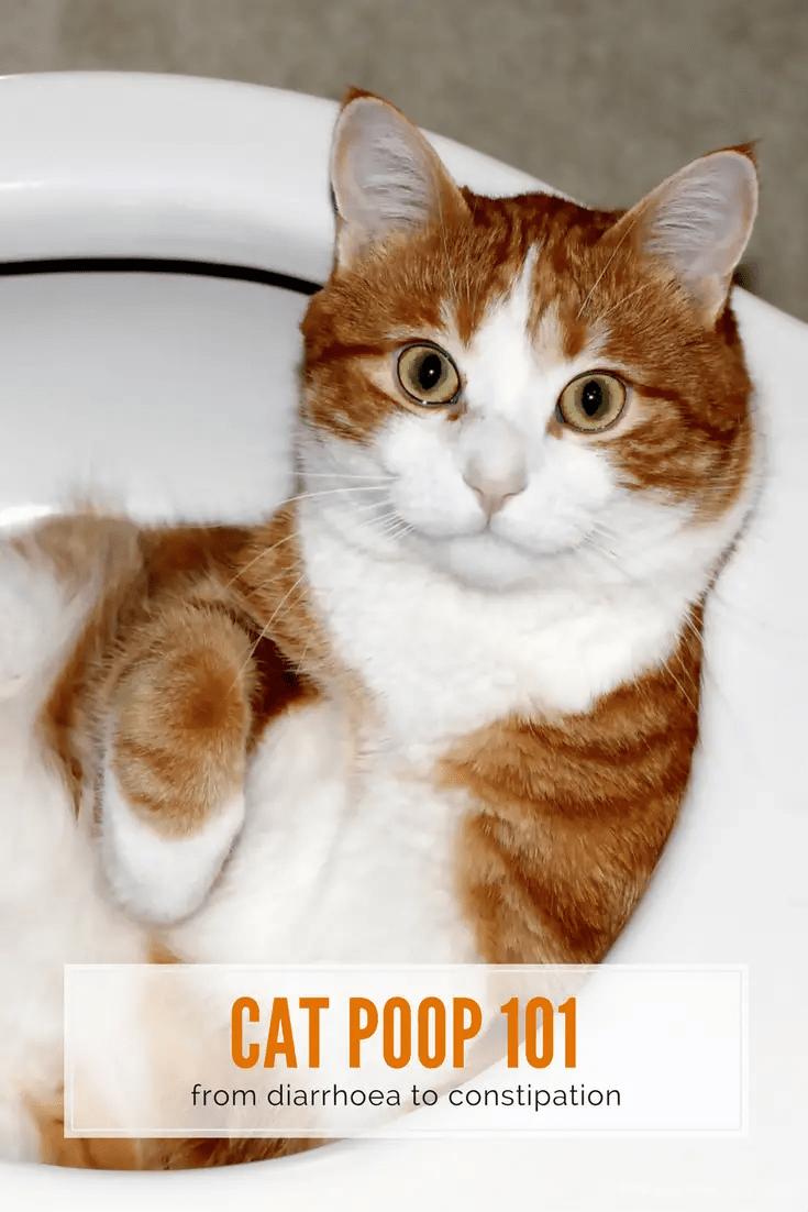 Best Way To Get Rid Of Cat Poop