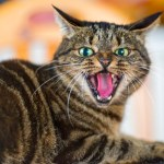 Rabies Infection in Cats – World Rabies Day
