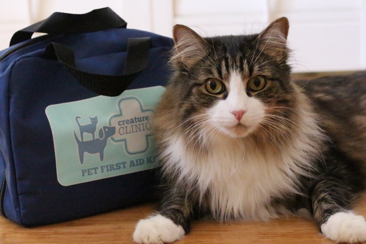 Medical emergencies occur when we least expect them to - stay calm, ensure you are prepared and invest in a pet first aid kit - it may save your cat's life | Be Prepared for a Pet Medical Emergency