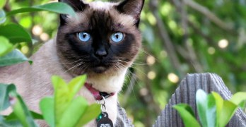 How to Deal with Redirected Aggression in Cats