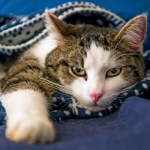 Ways to Keep Your Cat Warm this Winter