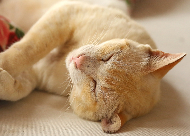 How to Help a Blind Cat Adjust to Life Without Sight