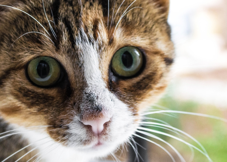 We look at a range of factors to help determine - how smart is your cat? Cats versus dogs, brain size, memory, problem-solving and emotional intelligence | How Smart is Your Cat?