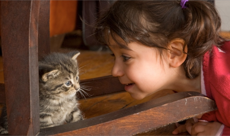Teach Your Child to Respect Cats