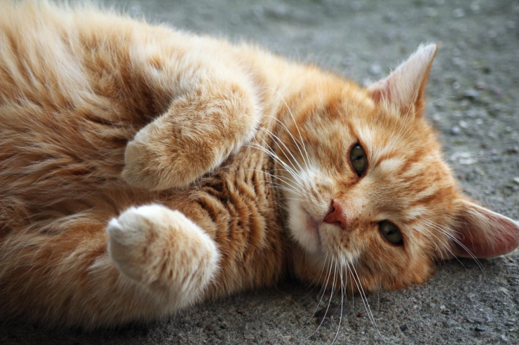 ginger cat lying on concrete