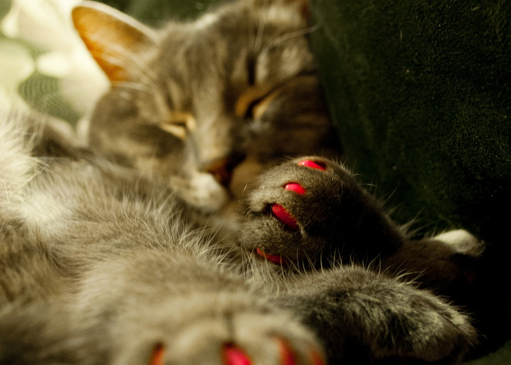 5 Alternatives to Declawing Cats