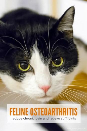 feline osteoarthritis - reduce chronic pain and relieve stiff joints