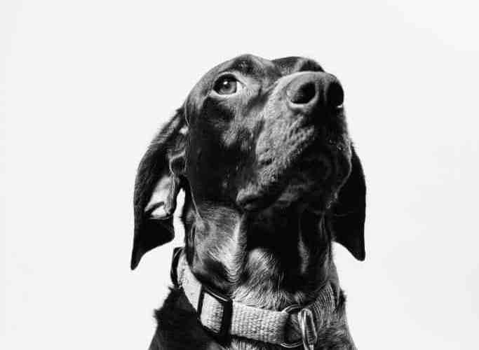 how to train a deaf dog