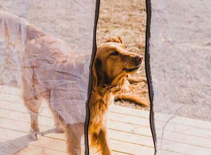 training a reactive dog