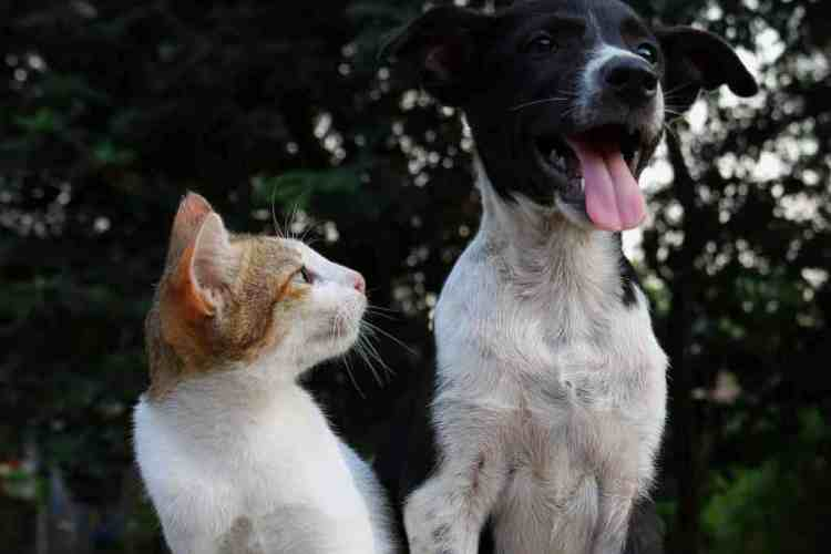 introducing a puppy to a cat