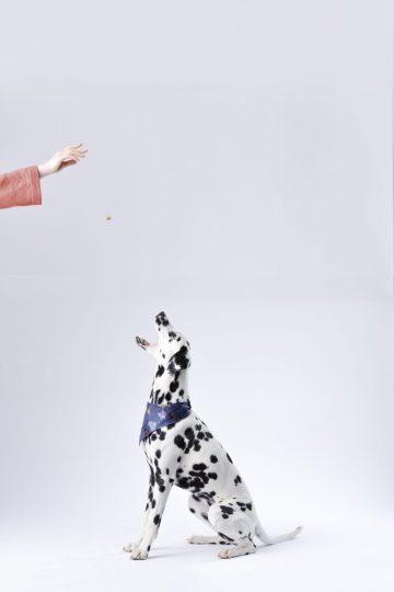 easy dog tricks for beginners
