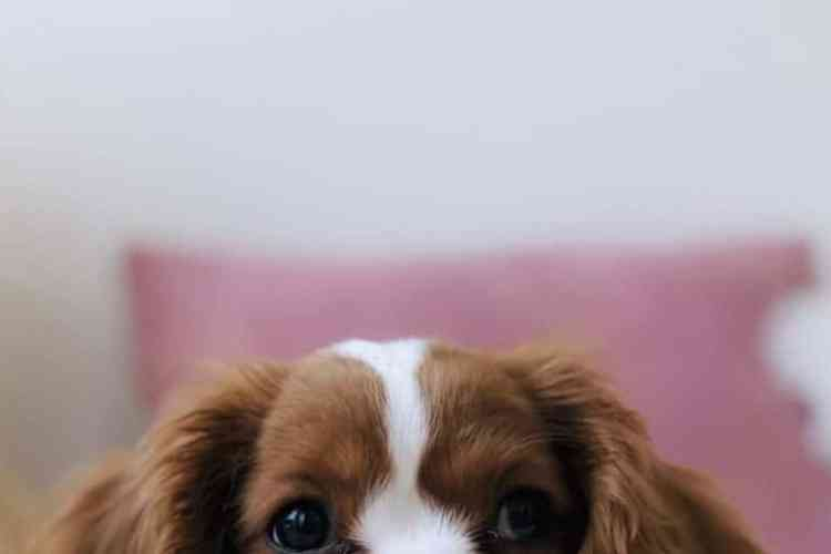 things to know before getting a puppy