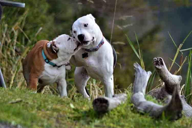 dog love bites