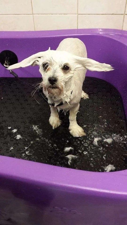 Dog Daycare And Grooming Courses The Paw Pad
