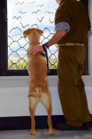 inmate and dog photo