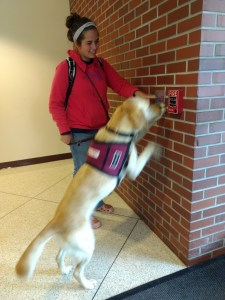 student training service dog