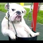 Funny Dogs - A Funny Dog Videos Compilation 2015