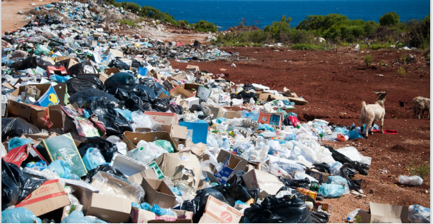 Garbage Dump Full of Harmful Products & Chemicals - A Serious Threat to Animal Life