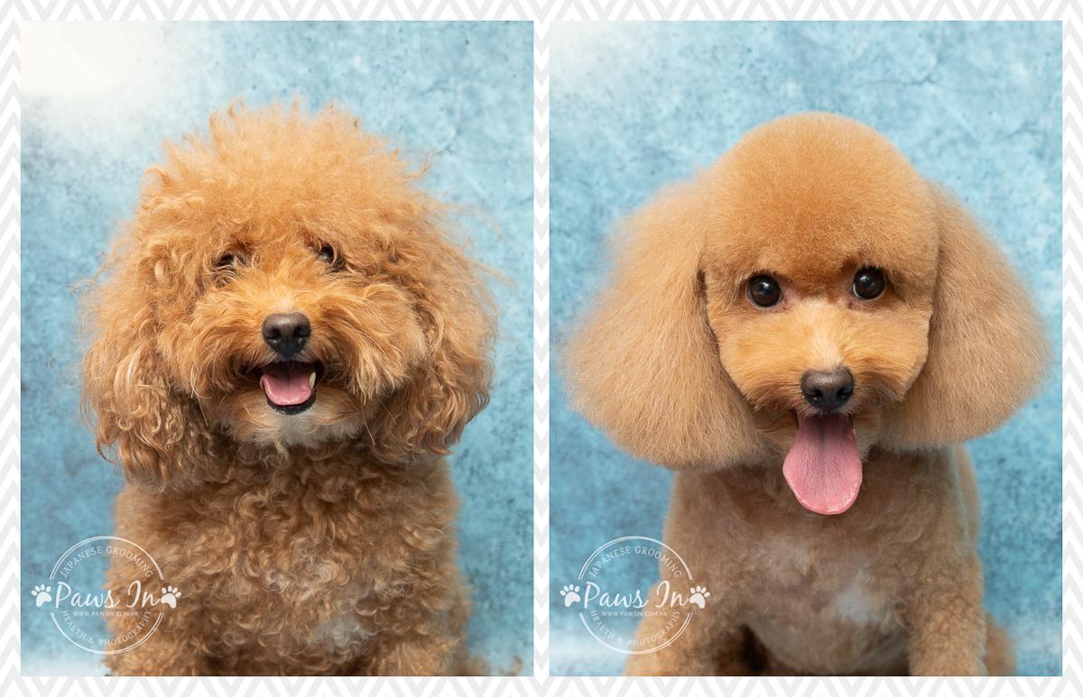 pet beauty, pet grooming, pet grooming yuen long, 元朗寵物美容, 剪甲, 寵物沖涼, 寵物美容, 寵物美容前後, 日式寵物美容, 狗 剪毛, 狗 沖涼