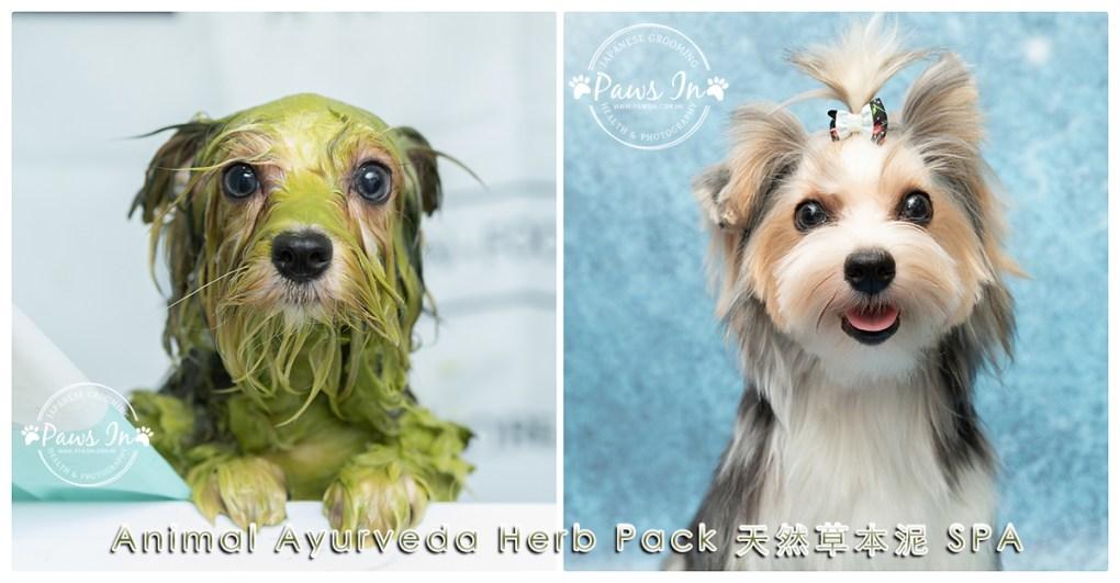 Animal Ayurveda Herb Pack 天然草本泥 SPA,dog spa, 狗狗 spa, 元朗寵物美容, 寵物美容, pawsin 寵物美容, paws in 寵物美容