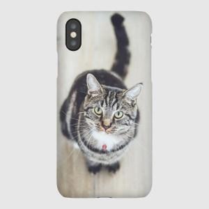 Home Cat iPhone Case