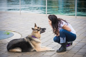Dog training behavioral certifications