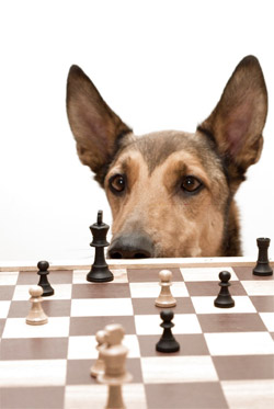How dogs learn right from wrong