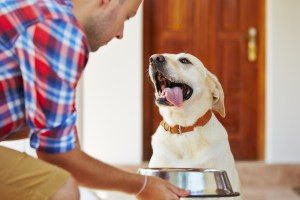 Paws  In Training Choosing a Quality Dog Food