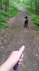 Walking on a quiet trail with a retractable leash.