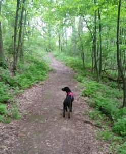 Hiking La Crosse, WI - Hass Tract