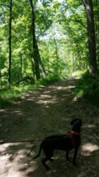 Hiking La Crosse, WI - Hixon Forest