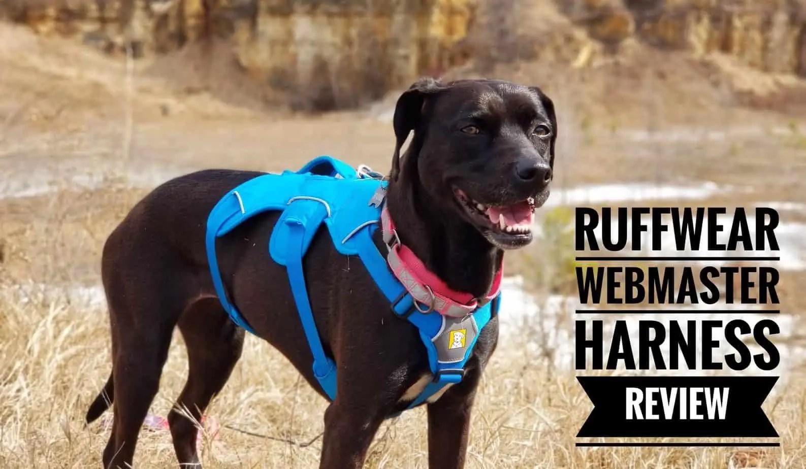 Ruffwear Webmaster Harness Review