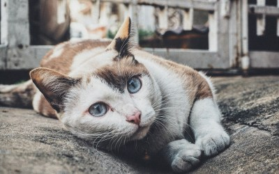 Why Cats Do the Things they Do