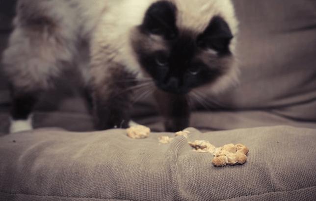 Cat Vomiting Hairballs Plus Blue