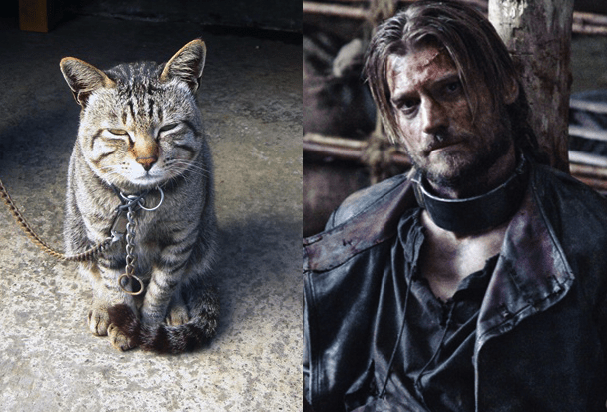 Game of Thrones Cat Names | Pawsome Kitty