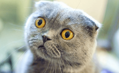 5 Best Over The Counter Cat Dewormer Kills Fleas