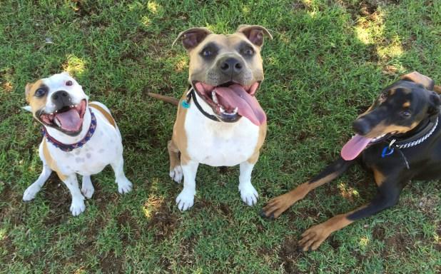 Sammy, Louie, Darcy