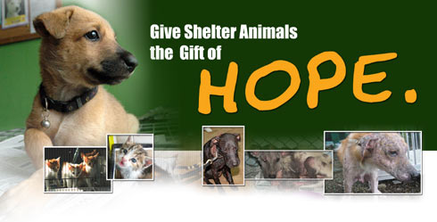 Image of: Philippine Animal Paws Needs Your Help Uwcsea Donate How Can Donate To Paws Philippine Animal Welfare