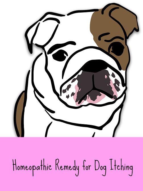 homeopathic remedy for dog itching