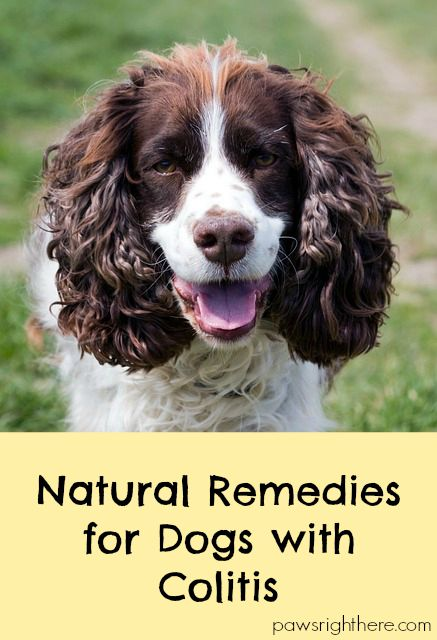 natural remedies for dogs with colitis