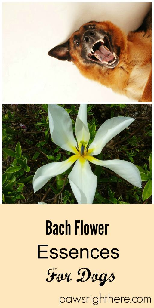 Bach flower Rescue Remedy for dogs