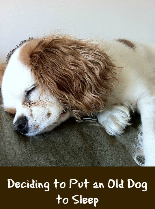 When should you put your dog to sleep