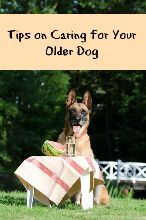 care for older dog