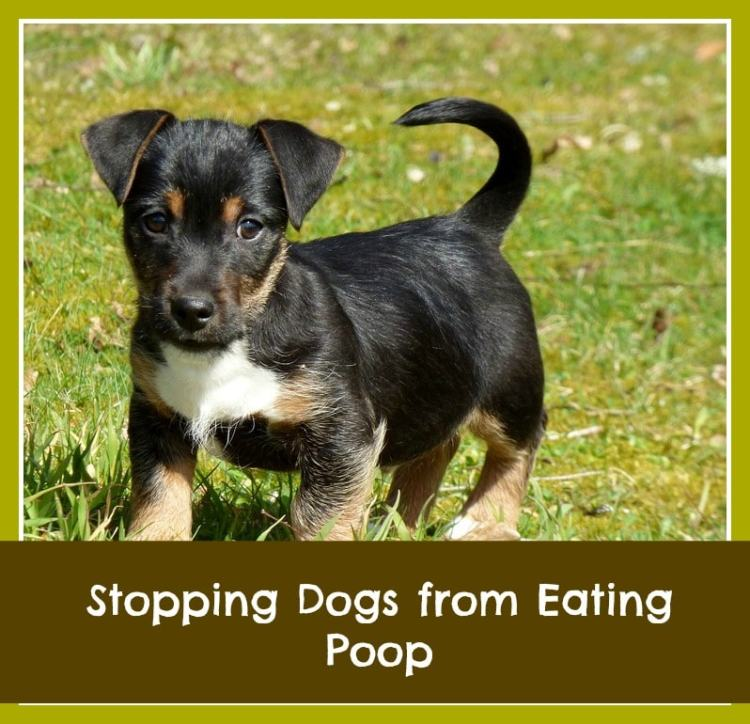 how do I get my dog to stop eating feces